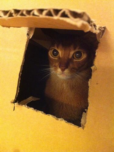 箱入りジョニ